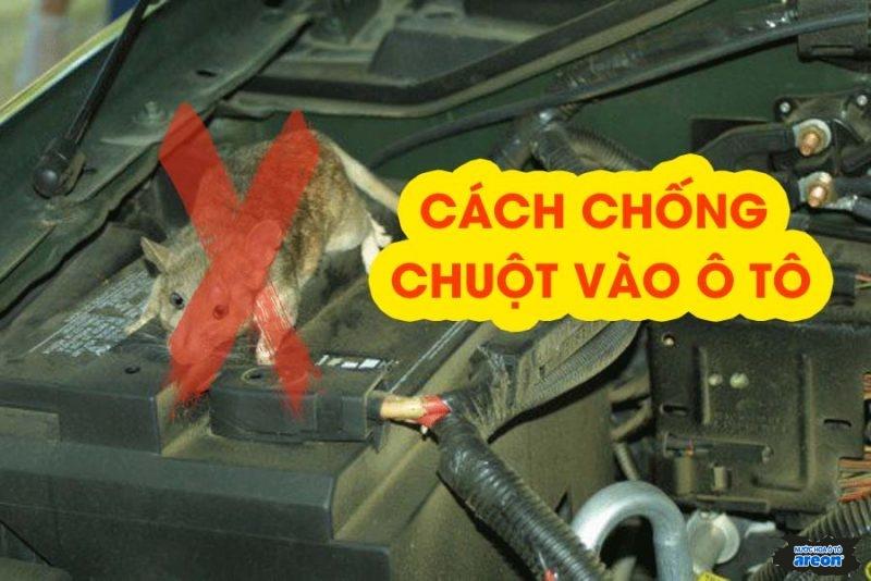 Phương pháp chống chuột vào xe ô tô, phá hoại khoang máy